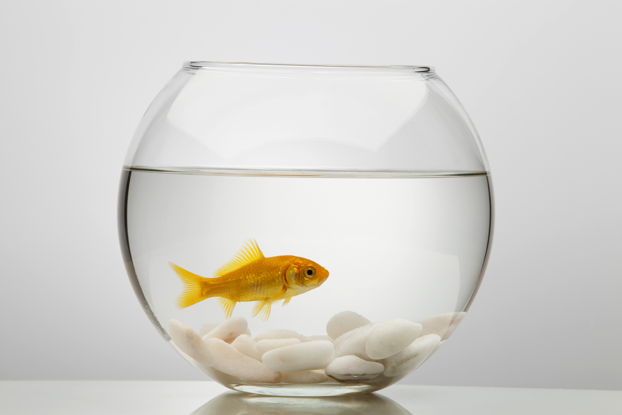 Consumer psychology smells like fish the really good for I smell like fish